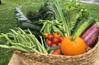 Panier légumes biologiques